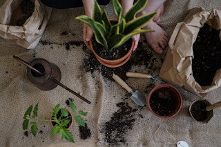 Self Care & Gardening-Related Projects to Stretch Your Creativity